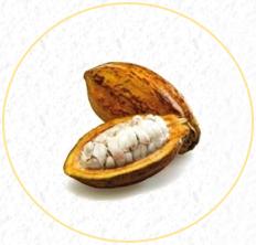Onze cacao